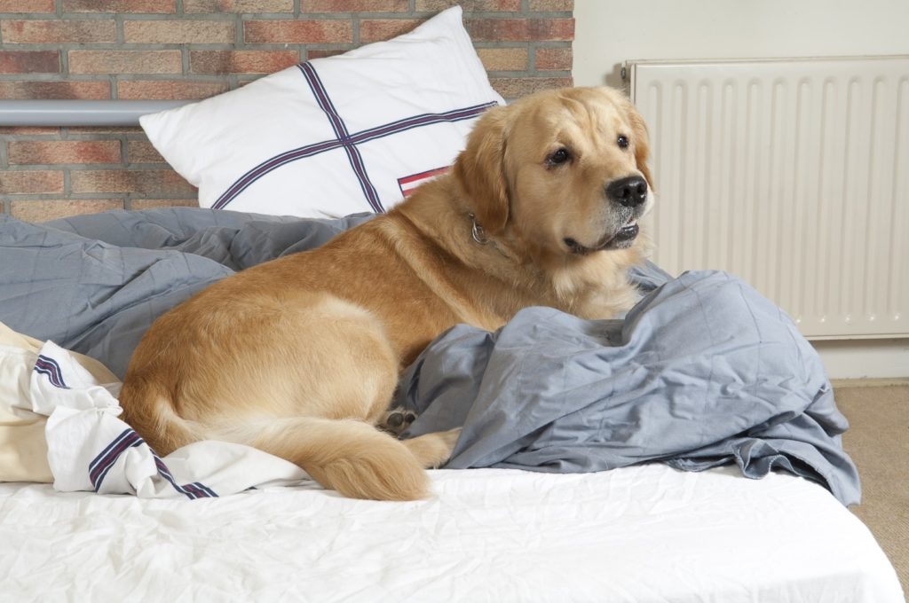 Replacing Dog Bed Filling