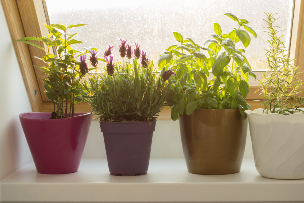 Comment cultiver un jardin intérieur de fines herbes