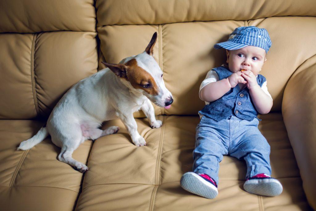 Enfant et chien sur canapé de cuir