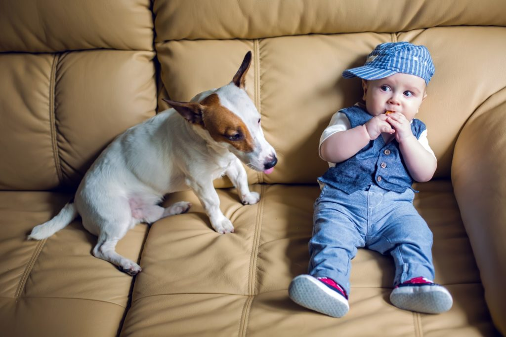 Kid and dog on leather sofa