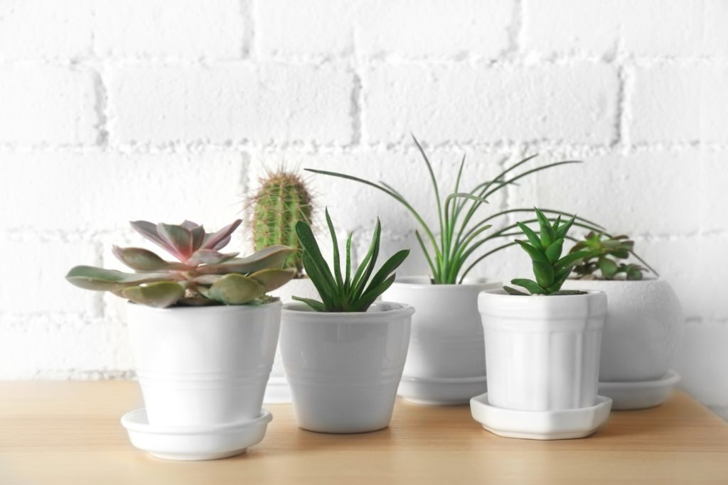 5 Easy-Care House Plants to Lift Your Mood