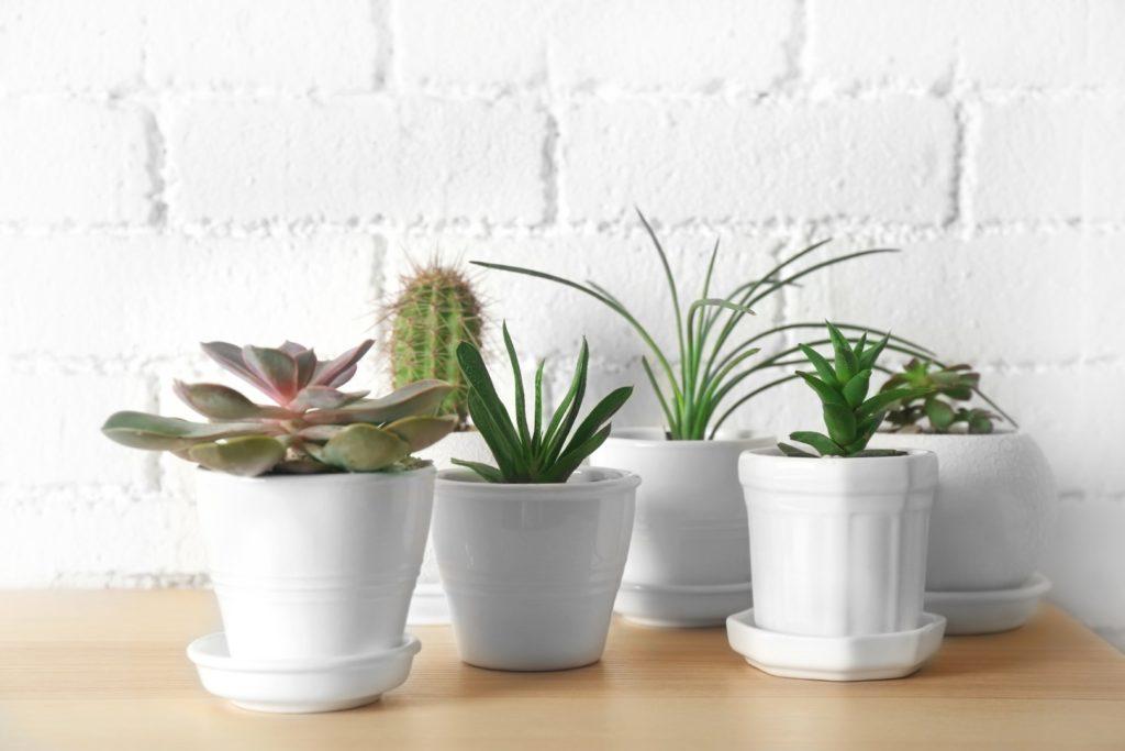 5 plantes faciles d entretien et bonnes pour vous. Black Bedroom Furniture Sets. Home Design Ideas