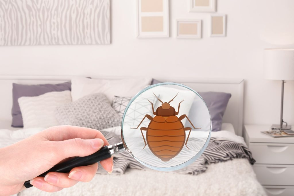 How to Keep Your Beautyrest Mattress Empty of Bed Bugs