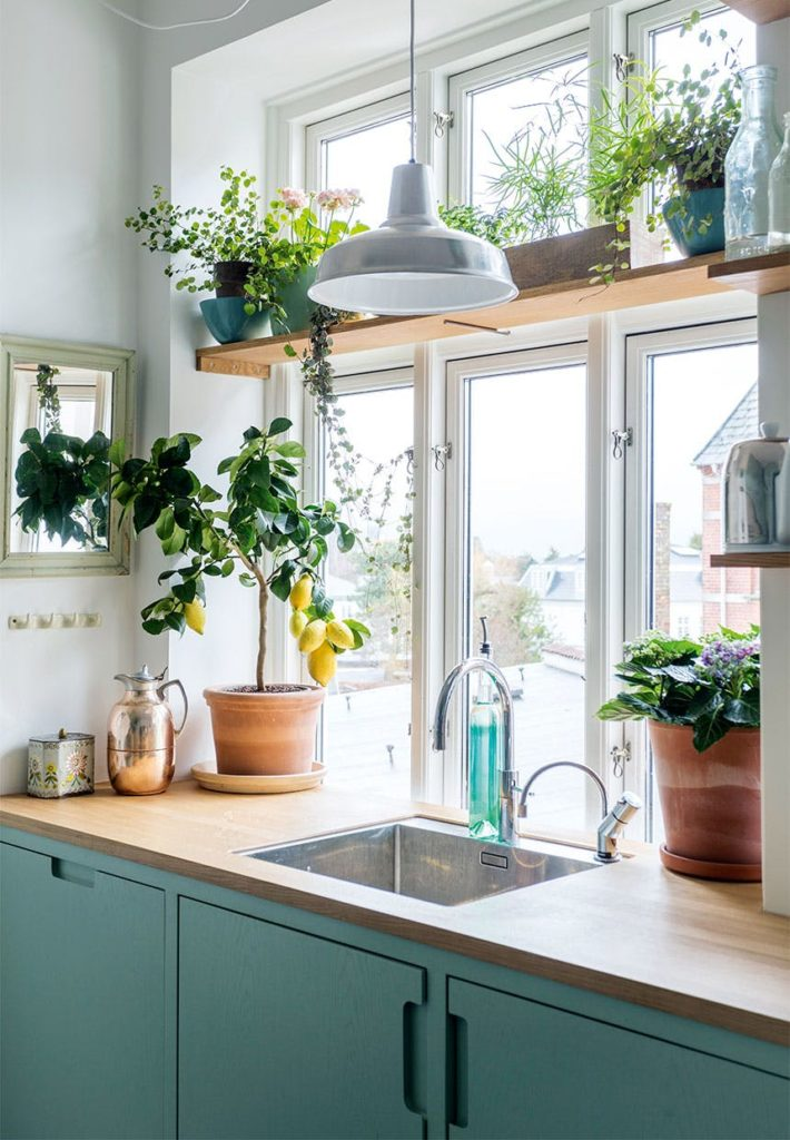 PLants in the window above the sink