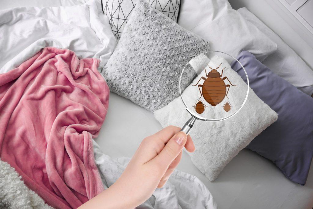 Détectez la présence de punaises de lit en 5 étapes