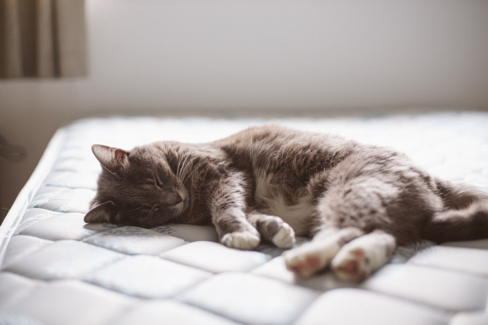 How to remove cat pee from mattress